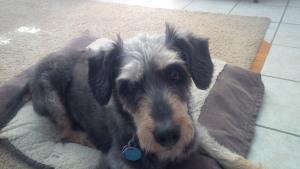 My sweetie Rudy
