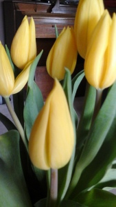 And some tulips.